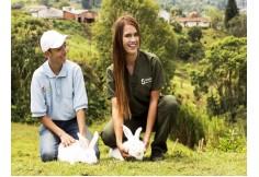 Centro CAEQUINOS Corporación de Altos Estudios Equinos de Colombia Sabaneta